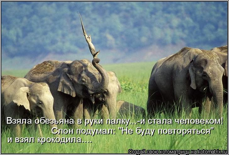 """Котоматрица: Взяла обезьяна в руки палку...-и стала человеком! и взял крокодила.... Слон подумал: """"Не буду повторяться"""""""