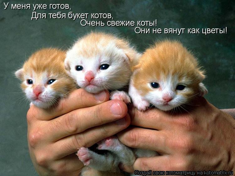 Котоматрица: У меня уже готов, Для тебя букет котов, Очень свежие коты! Они не вянут как цветы!