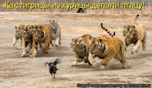 Котоматрица: Как тигрицы из курицы делали птицу!