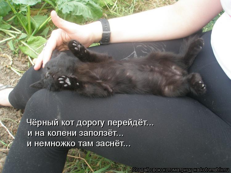 Котоматрица: Чёрный кот дорогу перейдёт... и на колени заползёт... и немножко там заснёт...