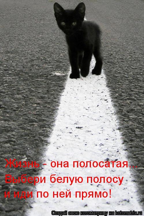 Котоматрица: и иди по ней прямо! Жизнь - она полосатая... Выбери белую полосу