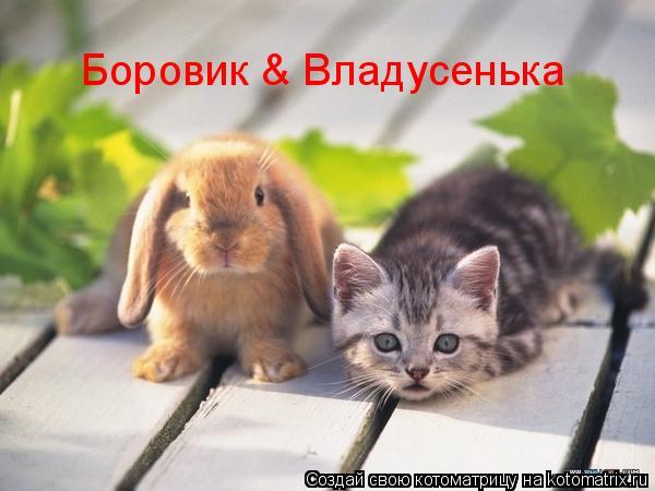 Котоматрица: Боровик & Владусенька