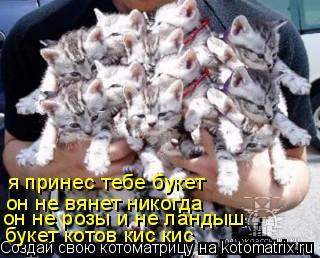 Котоматрица: я принес тебе букет  он не вянет никогда  он не вянет никогда  он не розы и не ландыш букет котов кис кис