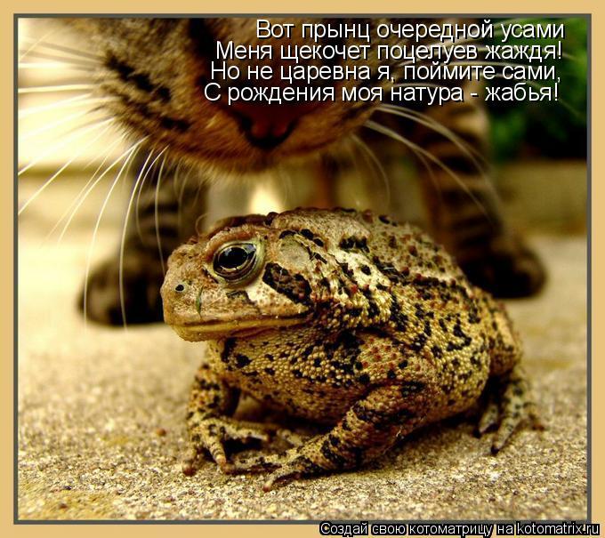Котоматрица: Вот прынц очередной усами Меня щекочет поцелуев жаждя! Но не царевна я, поймите сами, С рождения моя натура - жабья!