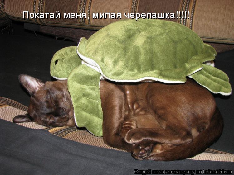 Котоматрица: Покатай меня, милая черепашка!!!!!