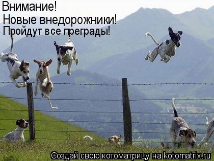 Котоматрица: Внимание! Новые внедорожники!  Пройдут все преграды!
