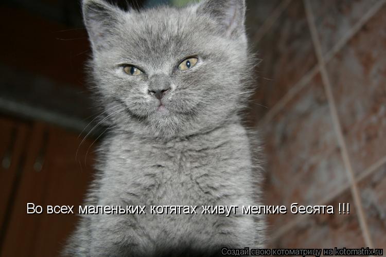 Котоматрица: Во всех маленьких котятах живут мелкие бесята !!!
