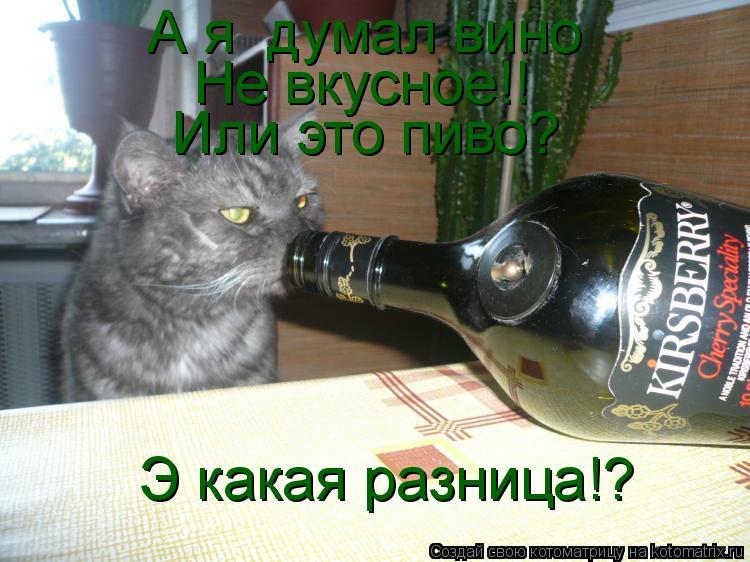 Котоматрица: А я  думал вино Не вкусное!! Или это пиво? Э какая разница!?