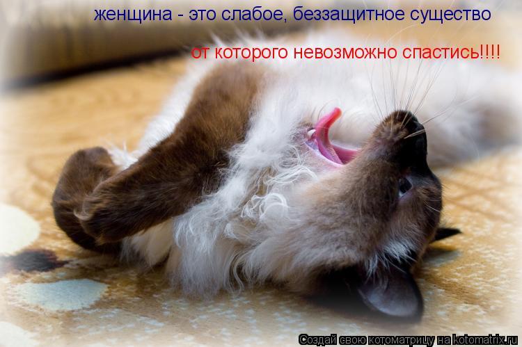 Котоматрица: женщина - это слабое, беззащитное существо от которого невозможно спастись!!!!