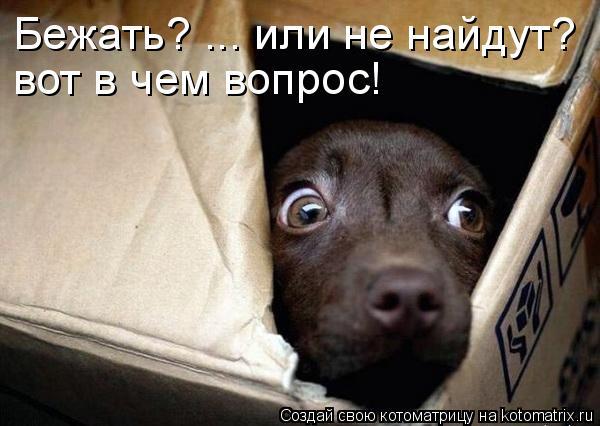 Котоматрица: Бежать? ... или не найдут?  вот в чем вопрос! вот в чем вопрос!
