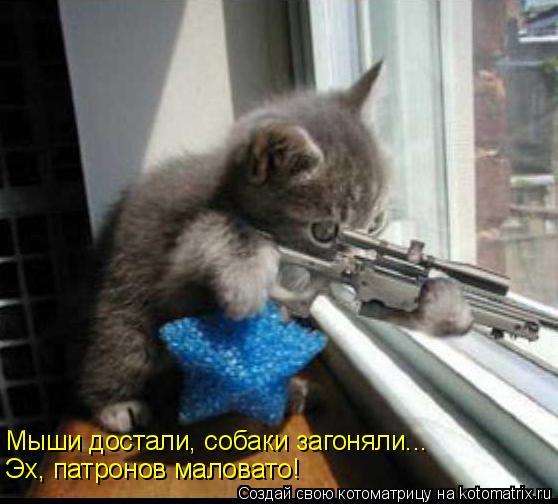 Котоматрица: Мыши достали, собаки загоняли... Эх, патронов маловато!