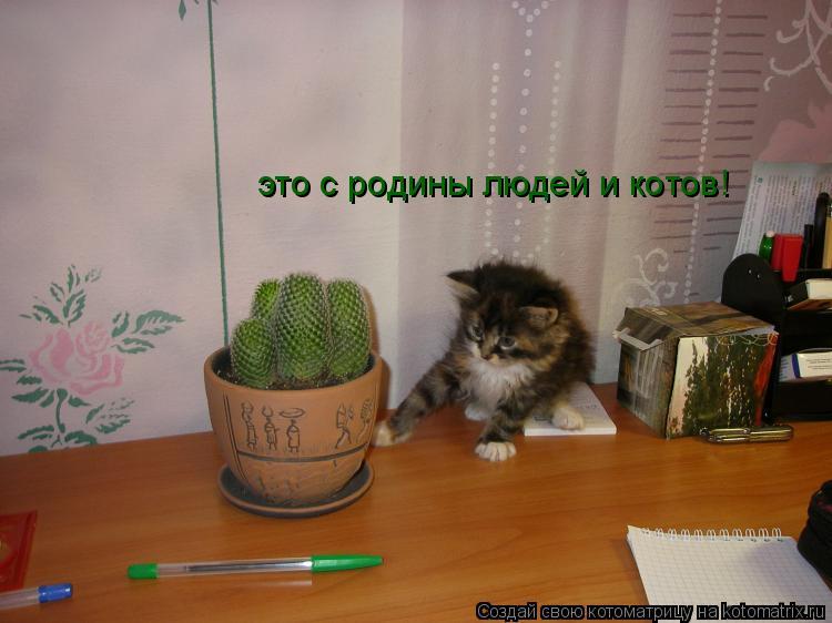 Котоматрица: это с родины людей и котов!