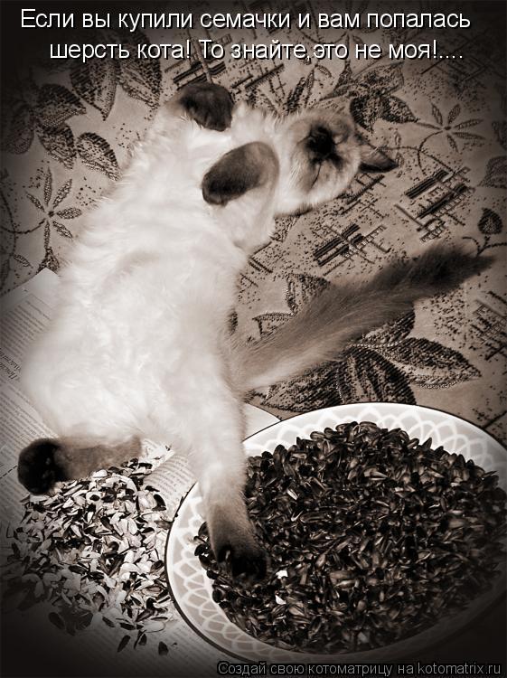 Котоматрица: Если вы купили семачки и вам попалась  шерсть кота! То знайте,это не моя!....