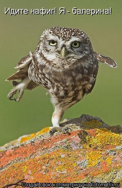 Котоматрица: Идите нафиг! Я - балерина!