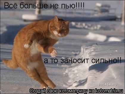 Котоматрица: Всё больше не пью!!!! а то заносит сильно!!