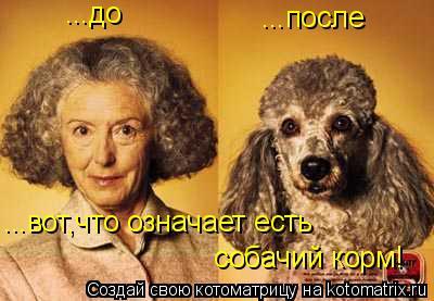 Котоматрица: ...до ...после ...вот,что означает есть  собачий корм!