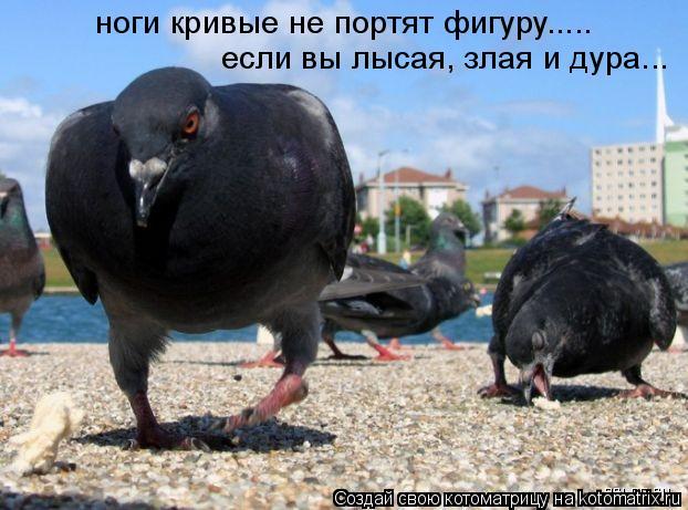 Котоматрица: ноги кривые не портят фигуру..... если вы лысая, злая и дура...
