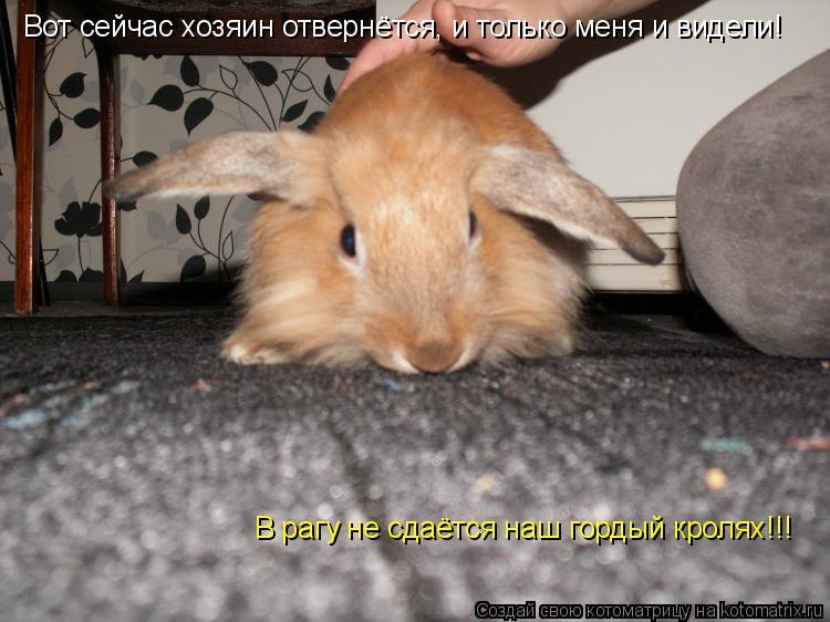 Котоматрица: В рагу не сдаётся наш гордый кролях!!! Вот сейчас хозяин отвернётся, и только меня и видели!
