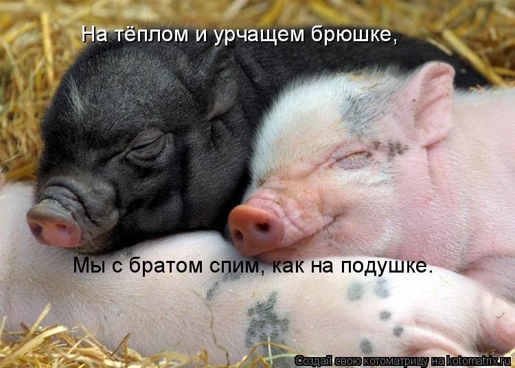 Котоматрица: На тёплом и урчащем брюшке, Мы с братом спим, как на подушке.