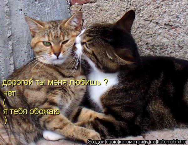 Котоматрица: дорогой ты меня любишь ? нет ( я тебя обожаю )