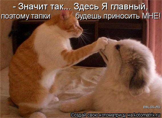 Котоматрица: - Значит так... Здесь Я главный,  поэтому тапки  будешь приносить МНЕ!