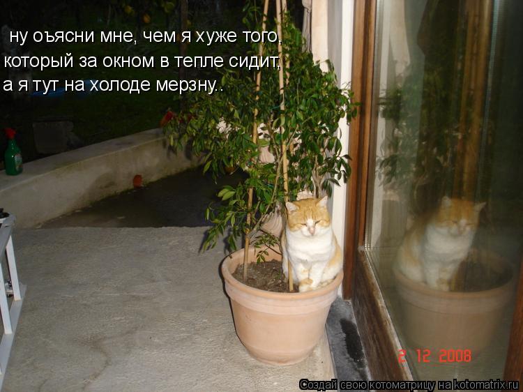 Котоматрица: ну оъясни мне, чем я хуже того, который за окном в тепле сидит,  а я тут на холоде мерзну..