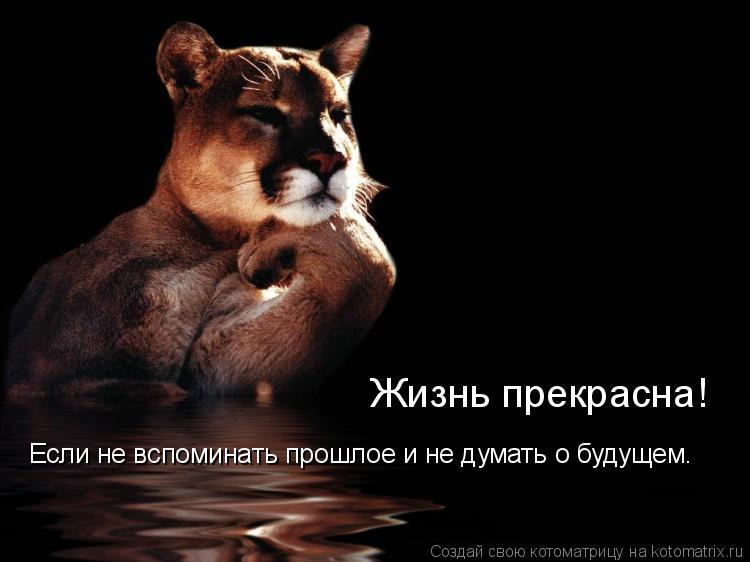 Котоматрица: Если не вспоминать прошлое и не думать о будущем. Жизнь прекрасна!
