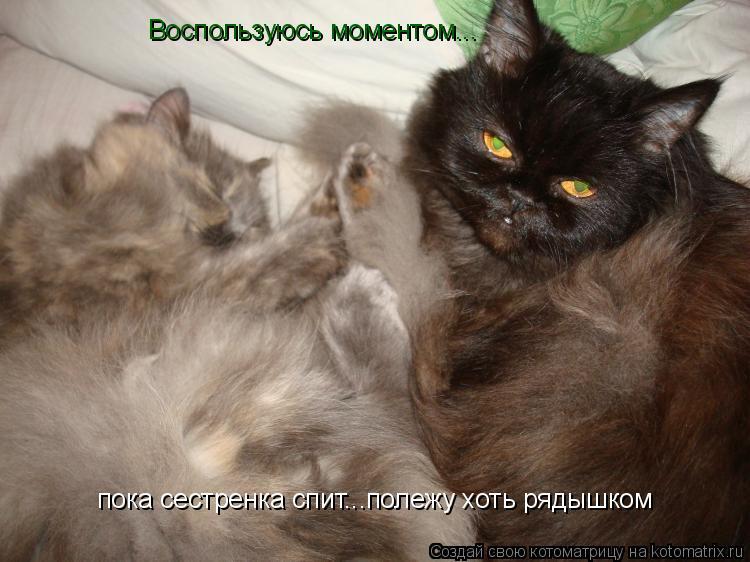 Котоматрица: Воспользуюсь моментом... пока сестренка спит...полежу хоть рядышком