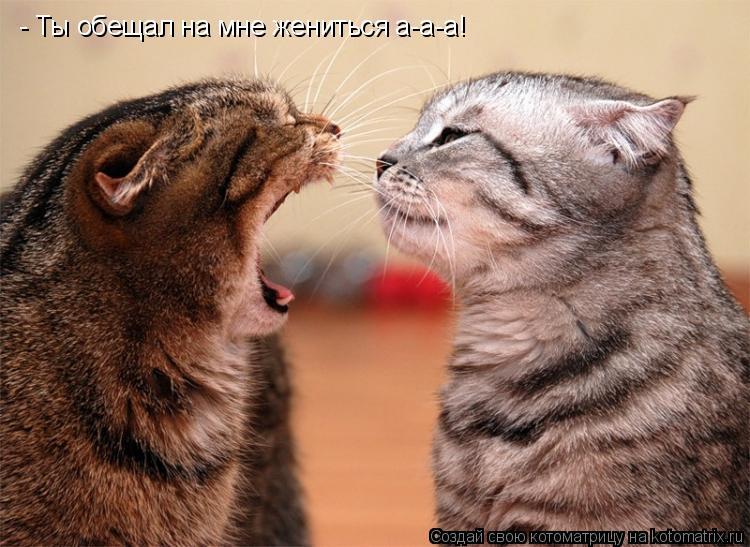 Котоматрица: - Ты обещал на мне жениться а-а-а! - Ты обещал на мне жениться а-а-а!