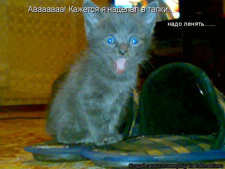 Котоматрица: Аааааааа! Кажется я наделал в тапки... надо ленять......