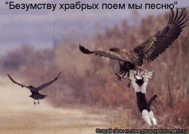 """Котоматрица: """"Безумству храбрых поем мы песню""""..."""