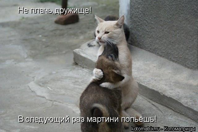 Котоматрица: Не плачь,дружище! В следующий раз мартини попьёшь!