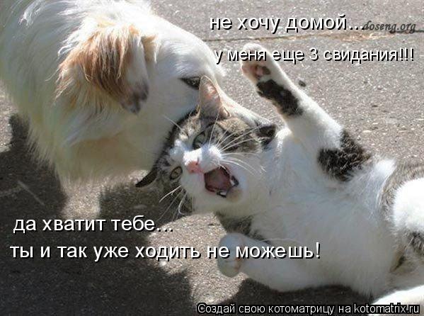 Котоматрица: не хочу домой... у меня еще 3 свидания!!! да хватит тебе... ты и так уже ходить не можешь!