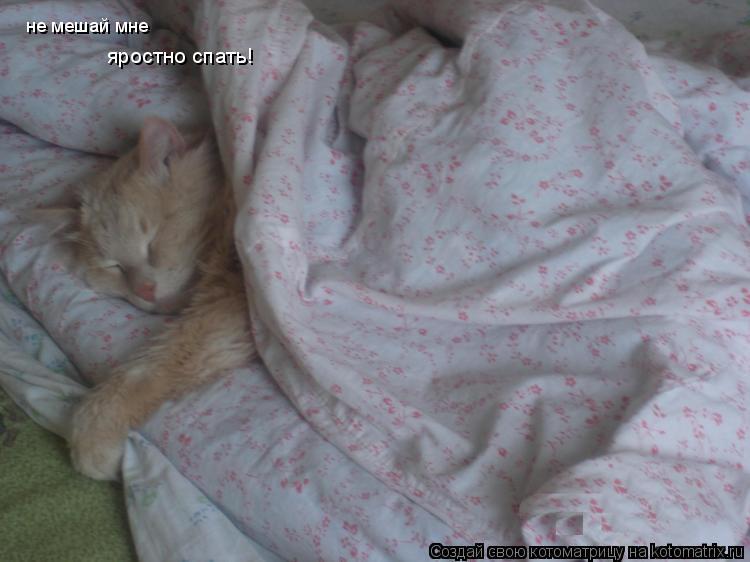 Котоматрица: не мешай мне яростно спать!