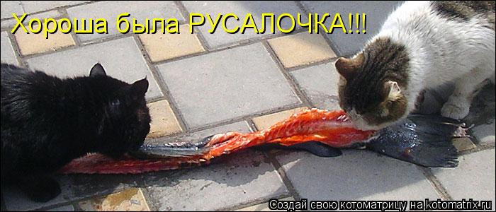 Котоматрица: Хороша была РУСАЛОЧКА!!!