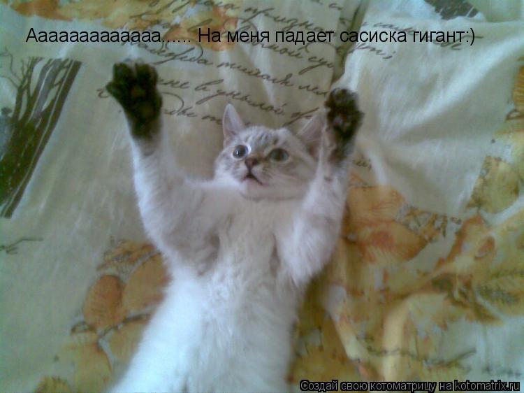 Котоматрица: Ааааааааааааа...... На меня падает сасиска гигант:)