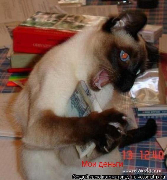 Котоматрица: Мои деньги