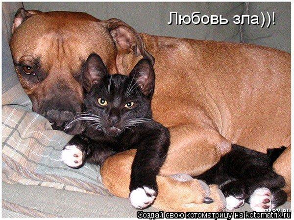 Котоматрица: Любовь зла))!