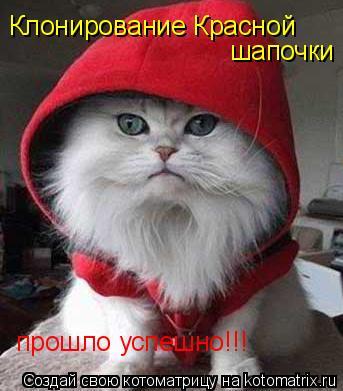 Котоматрица: Клонирование Красной шапочки прошло успешно!!!