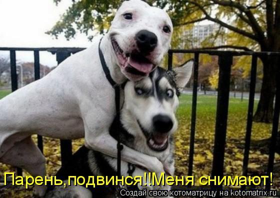 Котоматрица: Парень,подвинся!!Меня снимают!