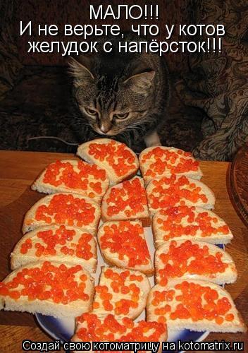 Котоматрица: МАЛО!!! И не верьте, что у котов  желудок с напёрсток!!!