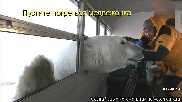 Котоматрица: Пустите погреться медвежонка