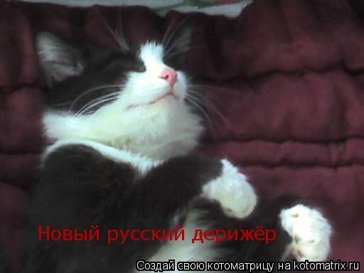 Котоматрица: Новый русский дерижёр