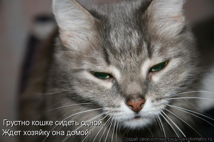 Котоматрица: Грустно кошке сидеть одной,  Ждет хозяйку она домой!