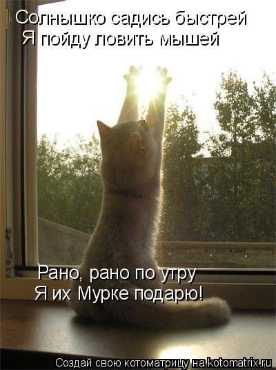 Котоматрица: Солнышко садись быстрей  Я пойду ловить мышей Рано, рано по утру Я их Мурке подарю!