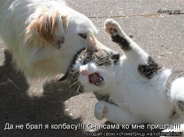 Котоматрица: Да не брал я колбасу!!! Она сама ко мне пришла!!!