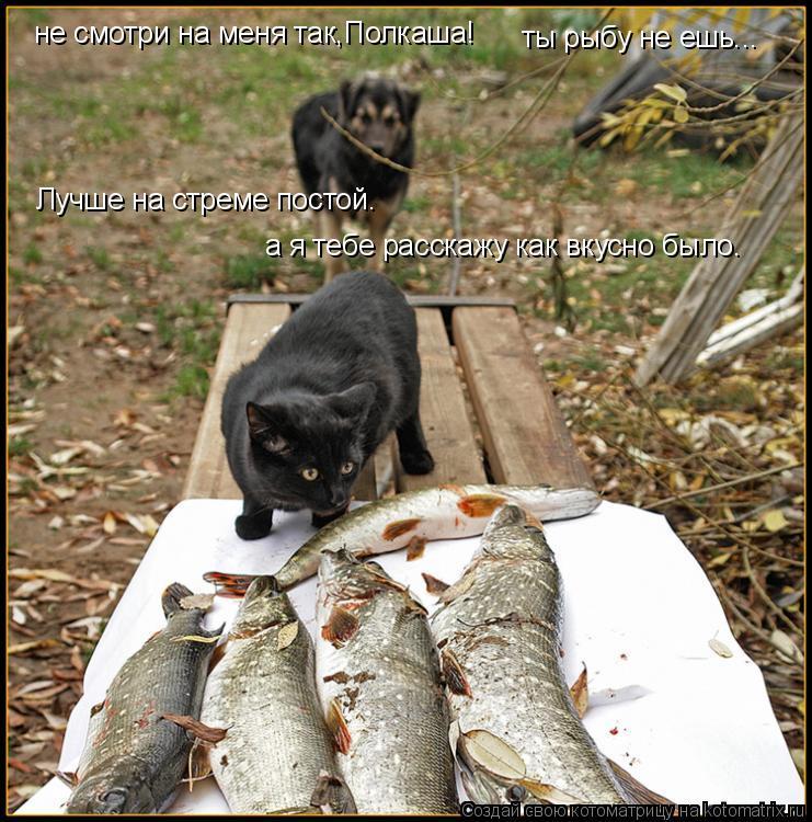 Котоматрица: не смотри на меня так,Полкаша! ты рыбу не ешь... Лучше на стреме постой.  а я тебе расскажу как вкусно было.