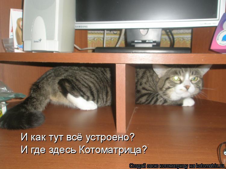 Котоматрица: И как тут всё устроено? И где здесь Котоматрица?