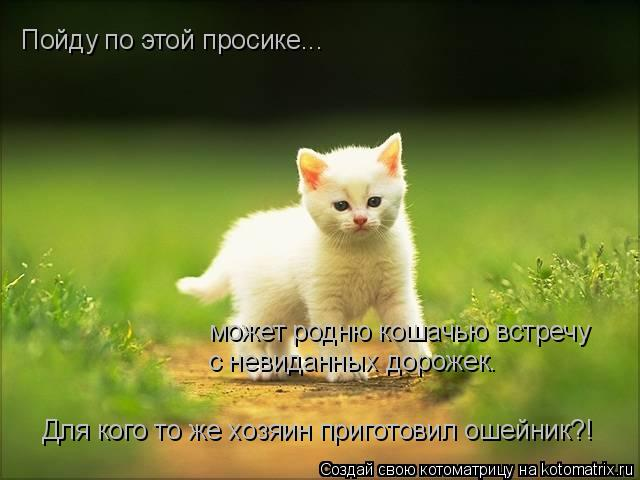 Котоматрица: Пойду по этой просике...  может родню кошачью встречу  с невиданных дорожек. Для кого то же хозяин приготовил ошейник?!