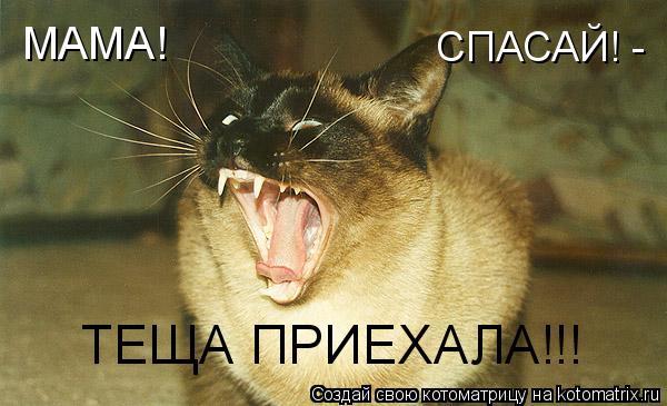 Котоматрица: МАМА!  СПАСАЙ! - ТЕЩА ПРИЕХАЛА!!!
